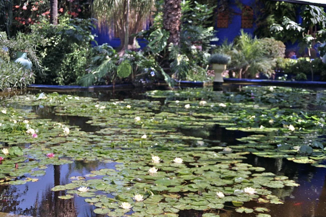 Marrakesh Jardin Majorelle 5